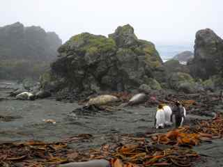 Pillow lavas, Macquarie Island
