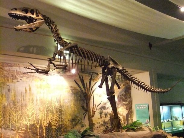 Megalosaurus skeleton, World Museum Liverpool, England. Found in southern England