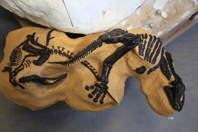artist's model of Nanotyrannus and Triceretops