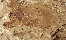 fossil raindrops 2