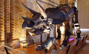 triceratops-slide-490_12251_1