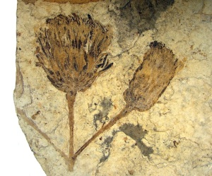 A fossilised flower
