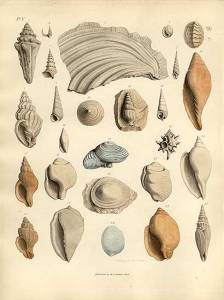 A plate from 'Organic Remains of a Former World' by James Parkinson
