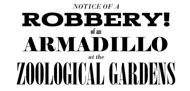 Armadillo text