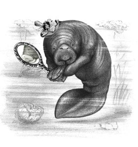 Manatee with hat sm