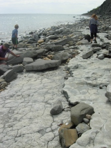 Fossil Hunting, Lyme Regis. Credit: Anthea Lacchia