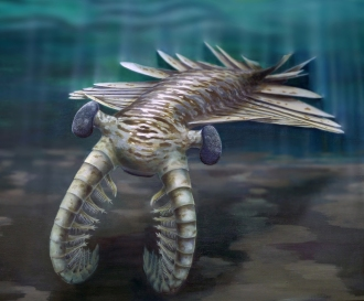 Anomalocaris reconstruction c. Katrina Kenny, University of Adelaide