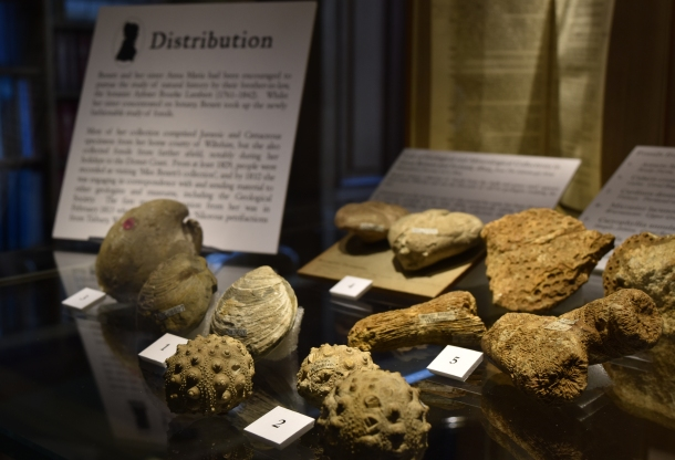 Part of Etheldred Benett's fossil collection, on display at the Geological Society (Loaned from the British Geological Survey)