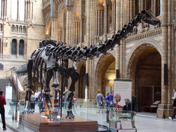 1280px-Diplodocus_(replica)_001_-_London