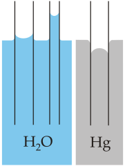 Capillary action of water compared to mercury