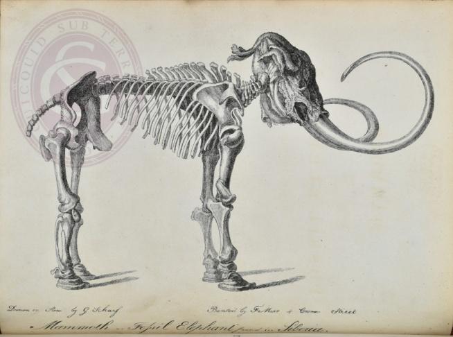 03-24-siberian-mammoth