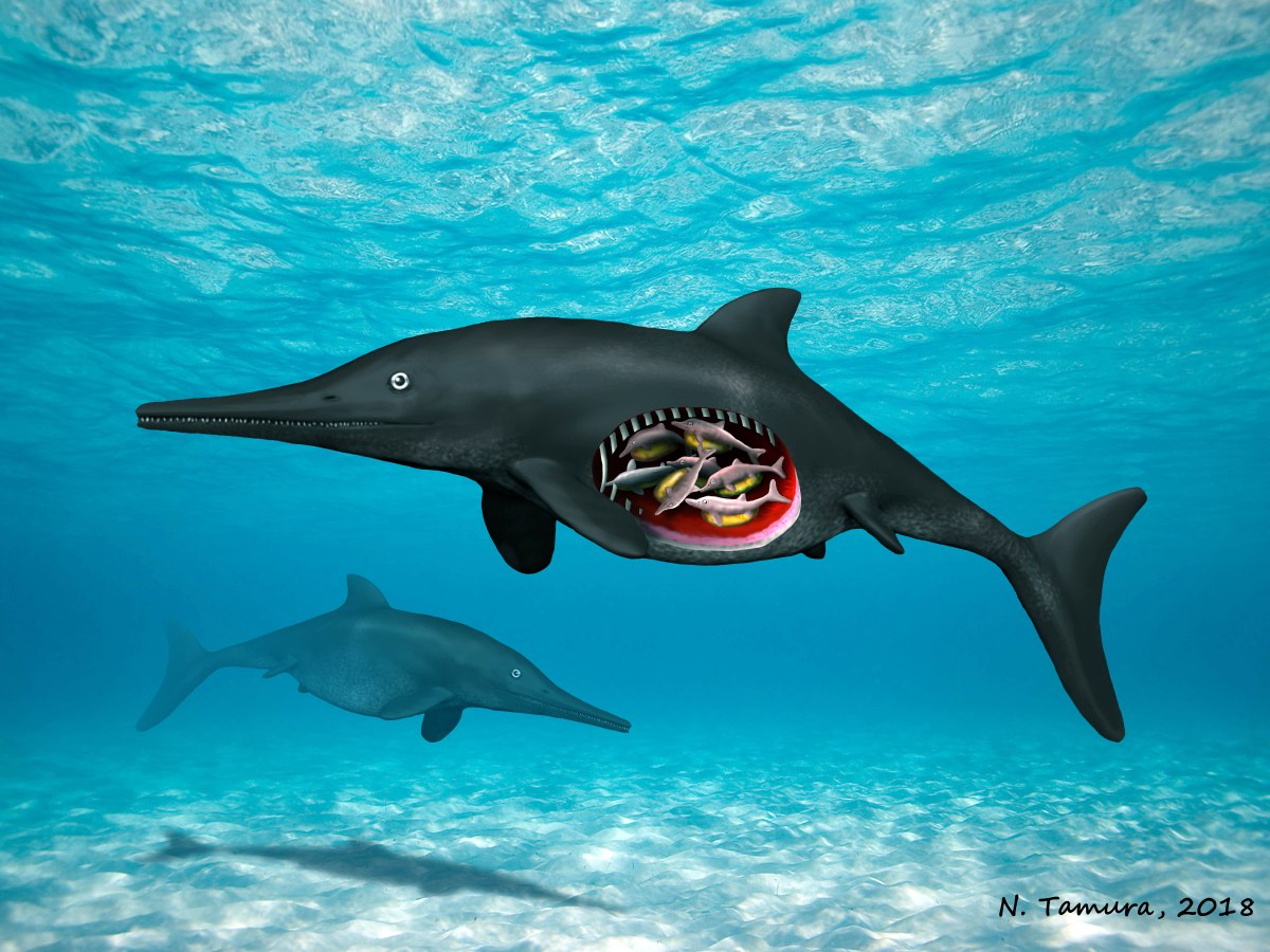 Yorkshire's first embryo-bearing ichthyosaur was pregnant with octuplets