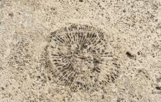 coral limestone albert memorial