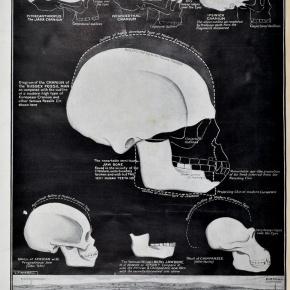 A Craniometrist's Toolkit