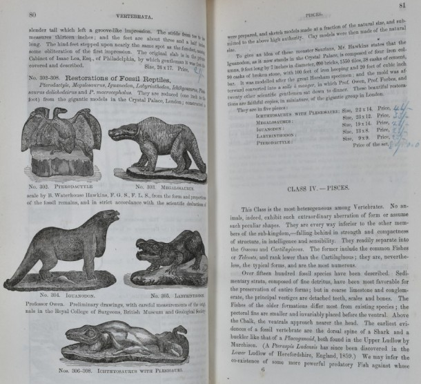 Models of Hawkins's dinosaurs and price list.